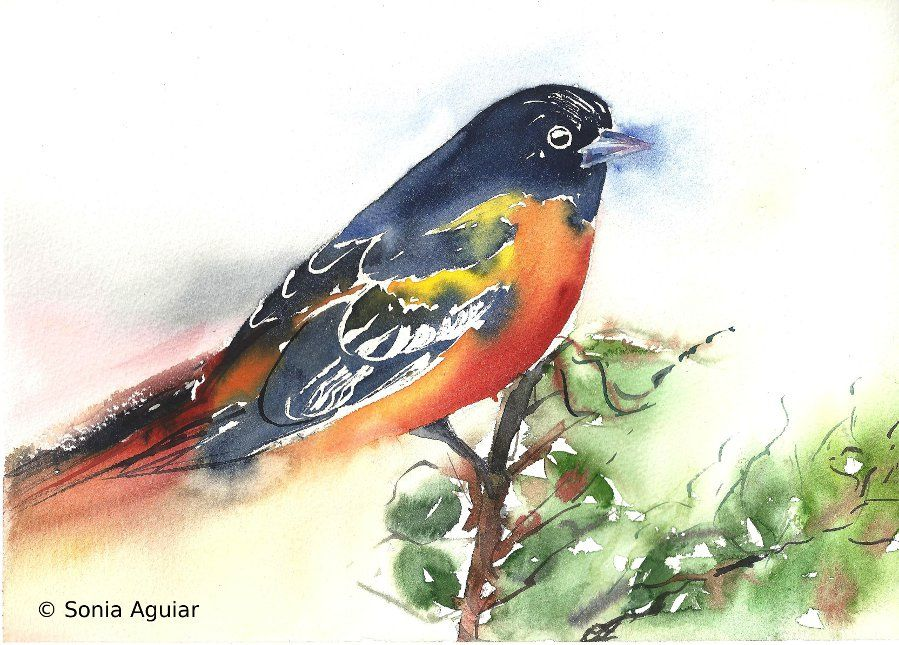 Bird Art Watercolor Baltimore Oriole Art, Bird art