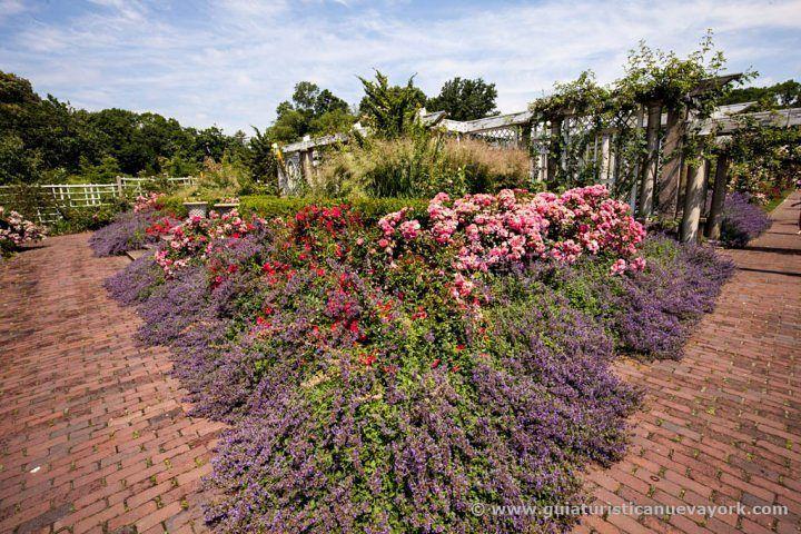 Precioso jardín de rosas del Jardín Botánico de Brooklyn #nuevayork #brooklyn