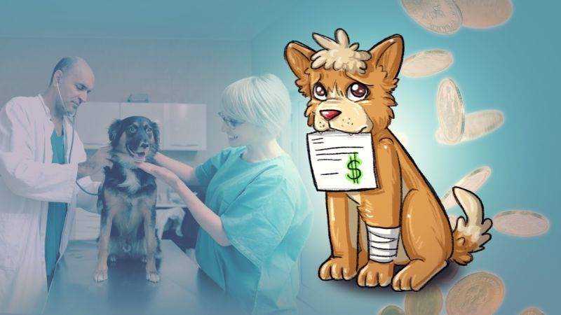 How to Pay Expensive Vet Bills Without Going Broke Pets