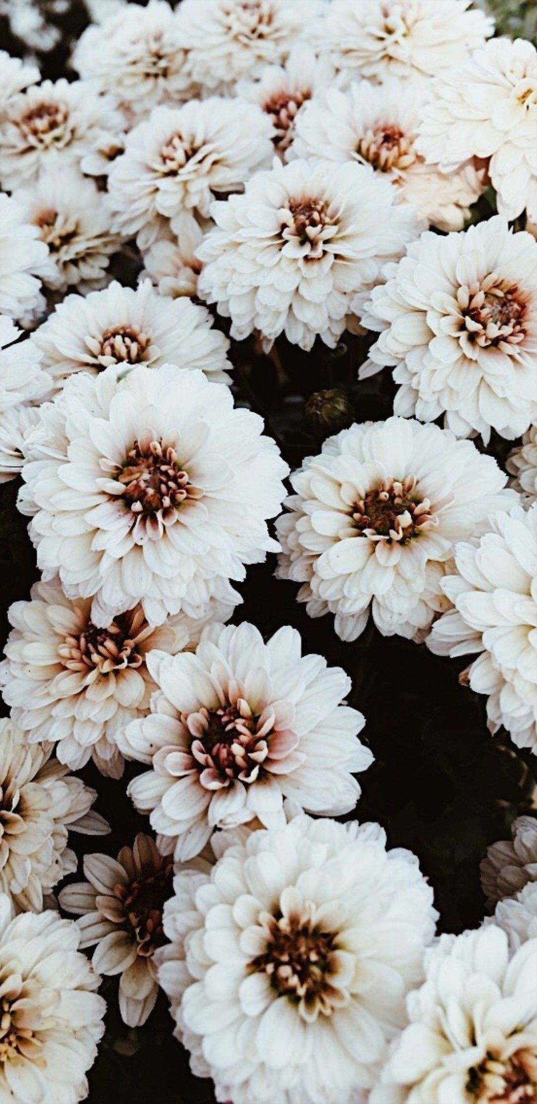 Pinterest Xokathrynnicole Flower Phone Wallpaper Iphone