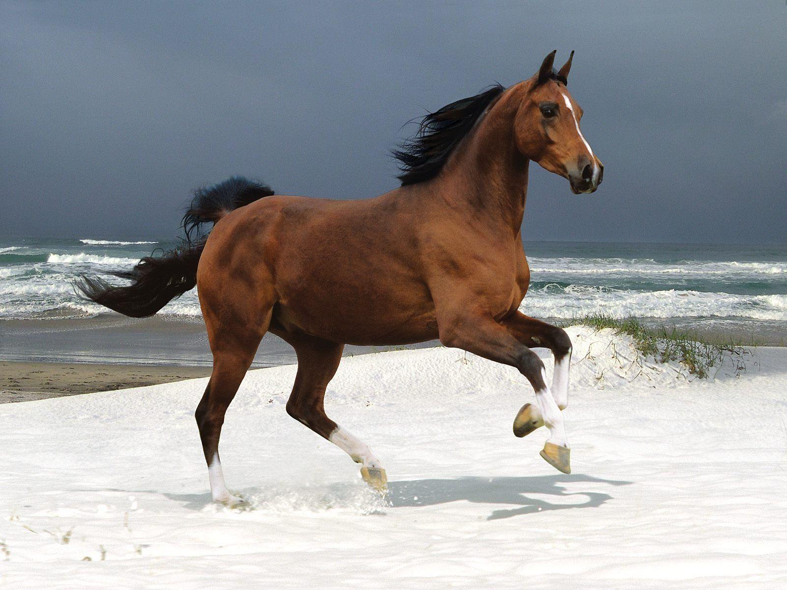 Simple Wallpaper Horse Flicka - 659776efac38bc0093831871428c5b43  Pictures_488160.jpg