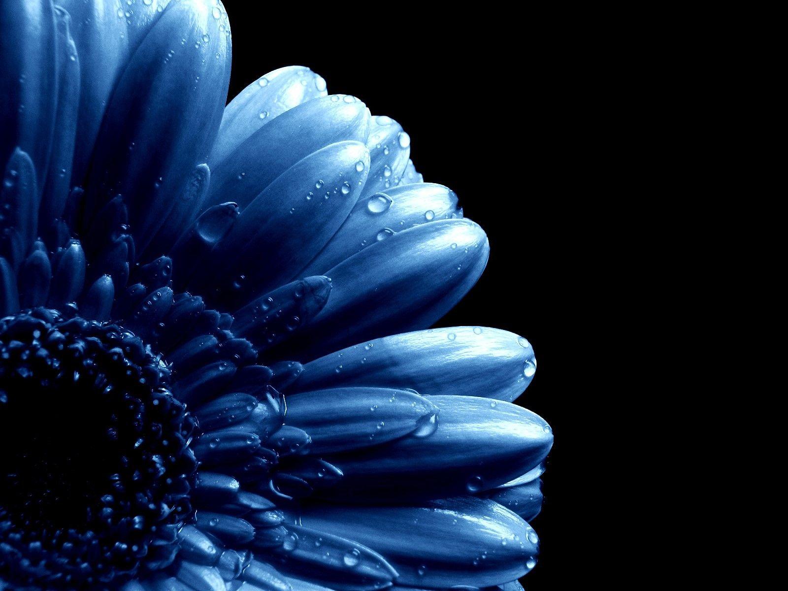 Blue Flowers | Blue Flower Stock | Blue on Blue | Pinterest | Blue ...