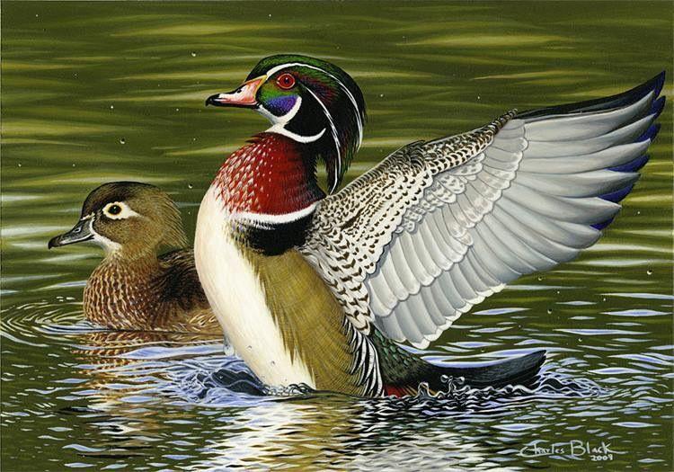 Pin By Park Plus Assoc On Ducks And Geese Wood Ducks Bird Hunting Backyard Birds