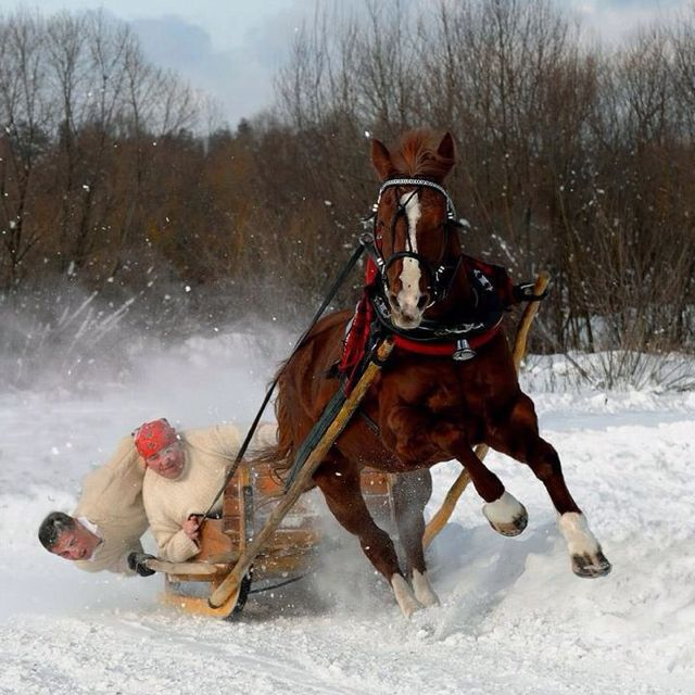 Dashing Through The Snow In A One Horse Open Sleigh At Bethany