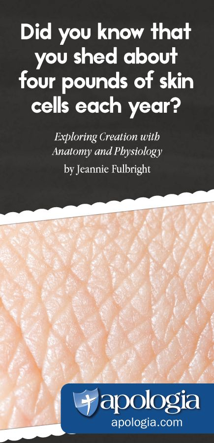 Exploring Creation with Anatomy and Physiology by Jeannie Fulbright ...