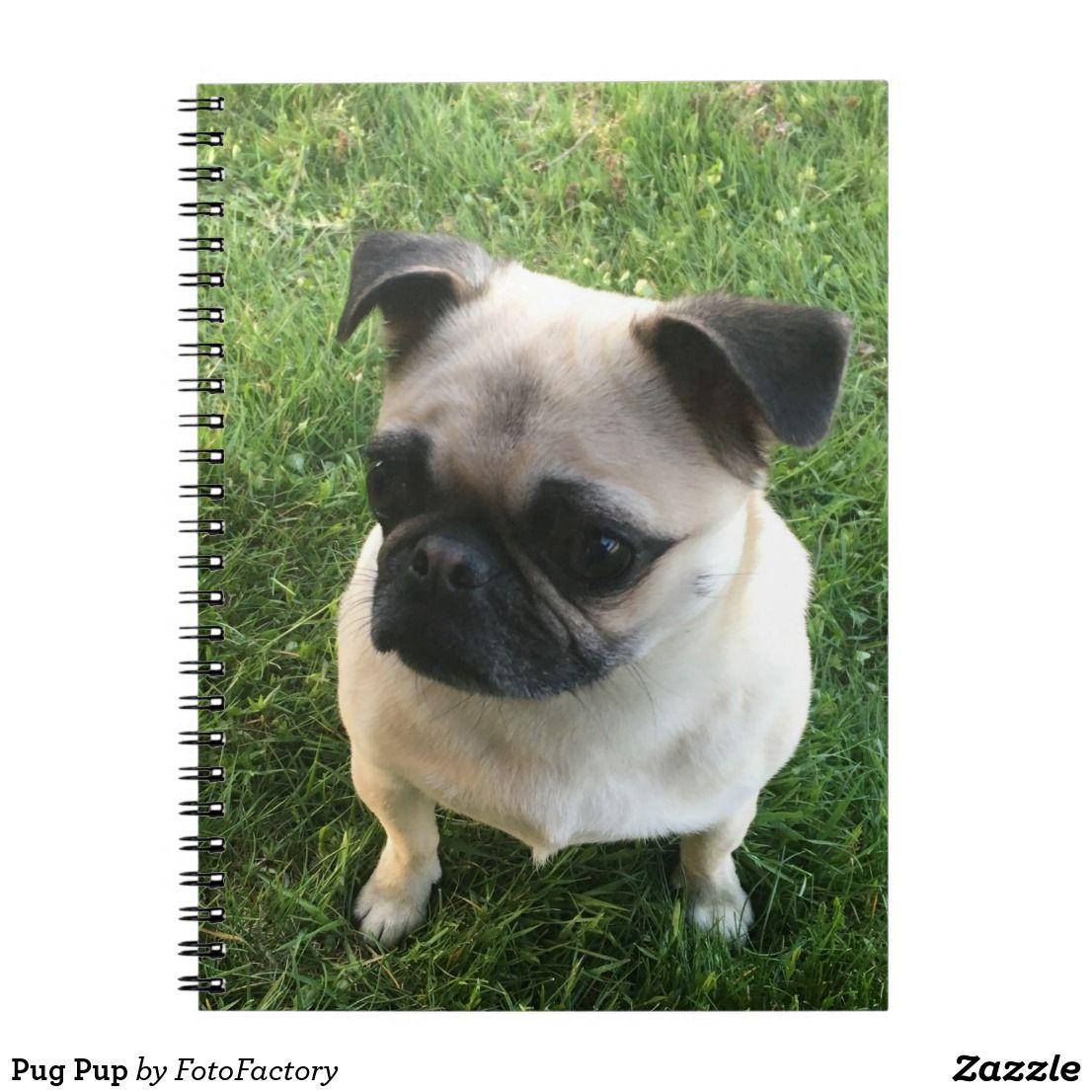 Pug Pup Notebook Zazzle Com Pugs Puppy Sitting Pup