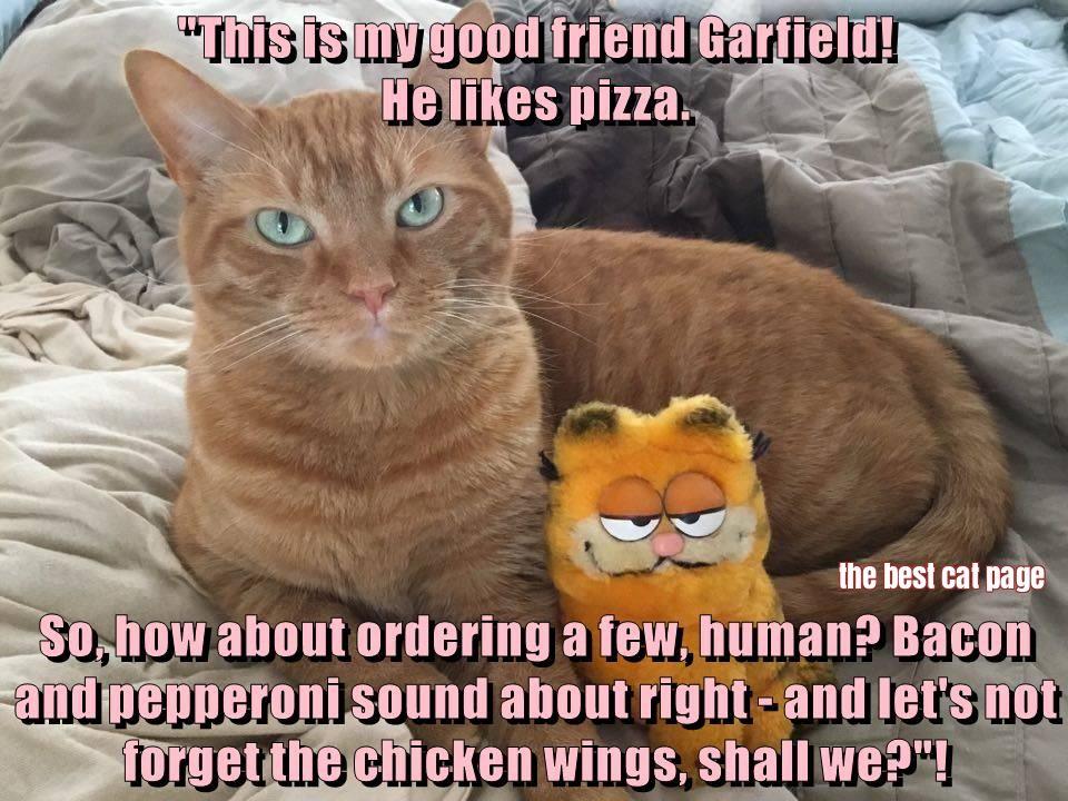 Chicken Wings Funny Meme: Animal Antics, Animals, Cats