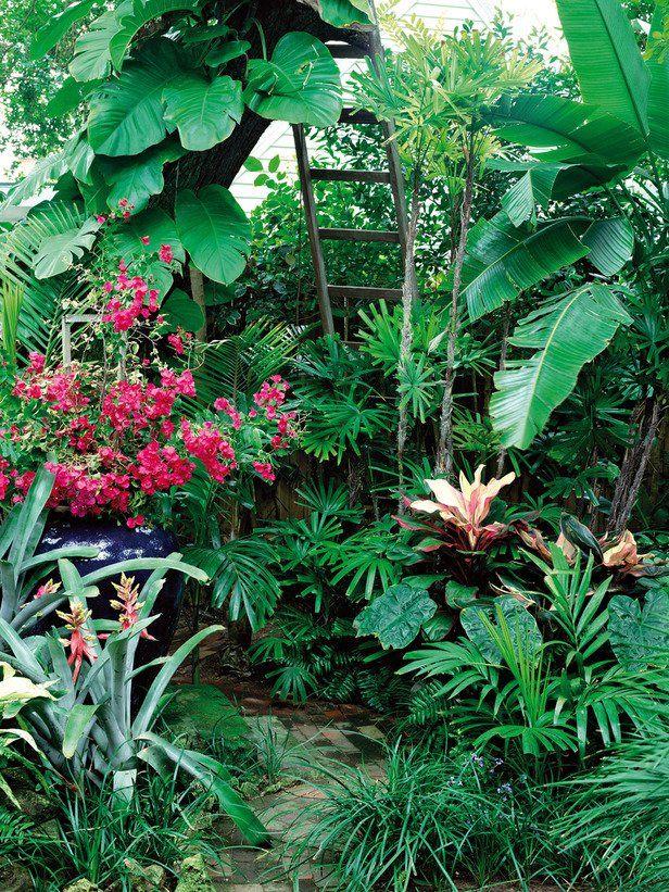 15 lush tropical garden ideas