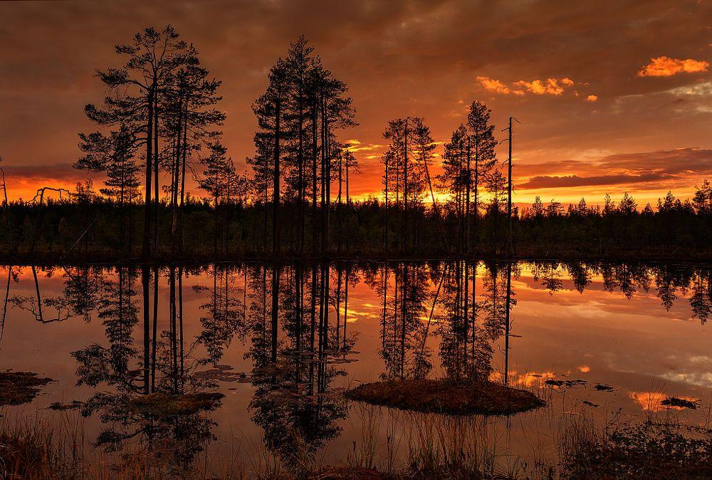 Finlandia bosque by Igor Altuna on 500px