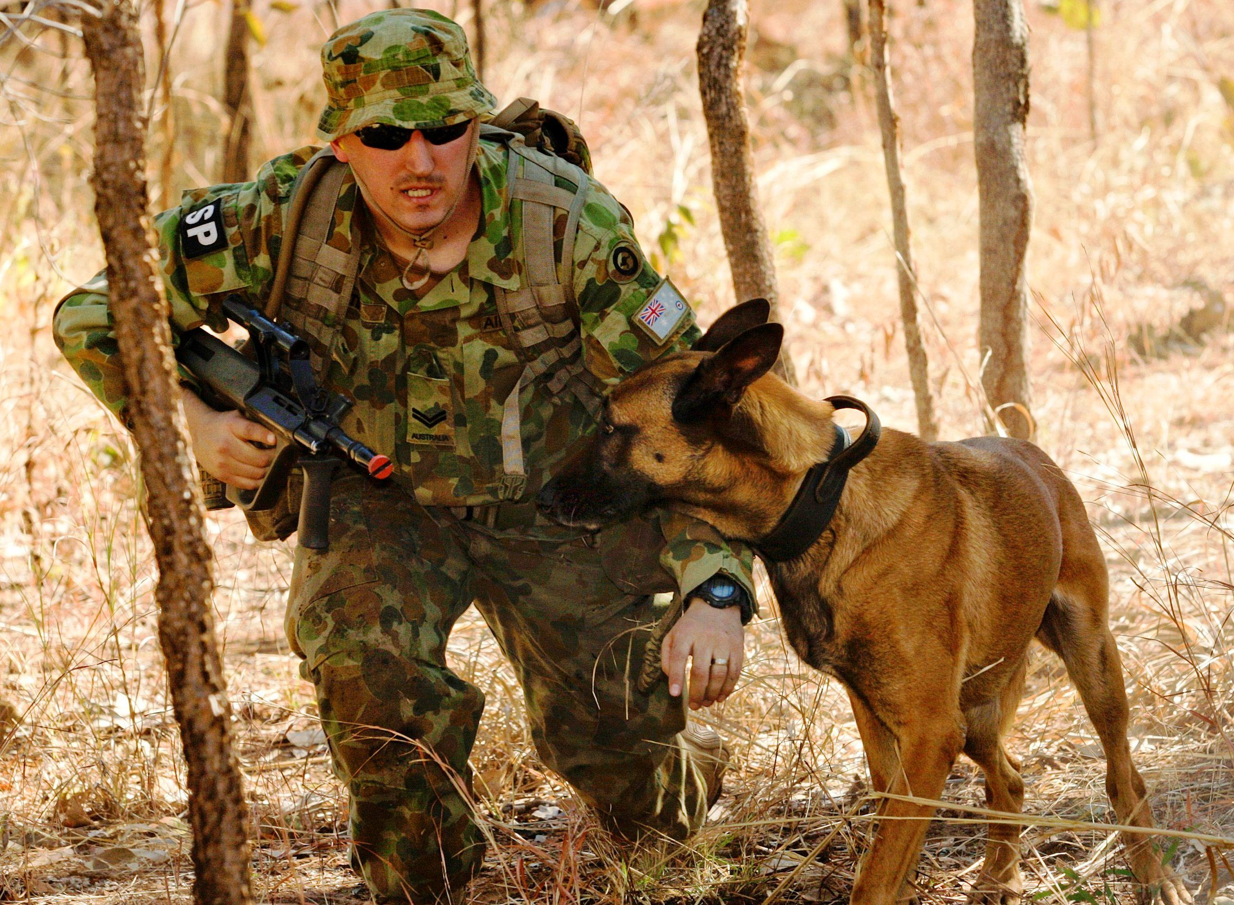 Australian Military Working Dogs Military dogs, Military