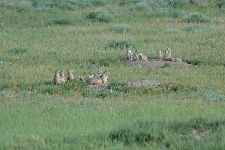 Greycliff prairie dog town state park montana prairie