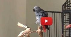 When The Music Came On, They Did Not Expect THIS! This Bird Totally Made My Day!