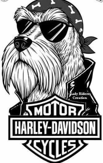 Pin By Marsha Persinger On Harley Davidson Signs Etc