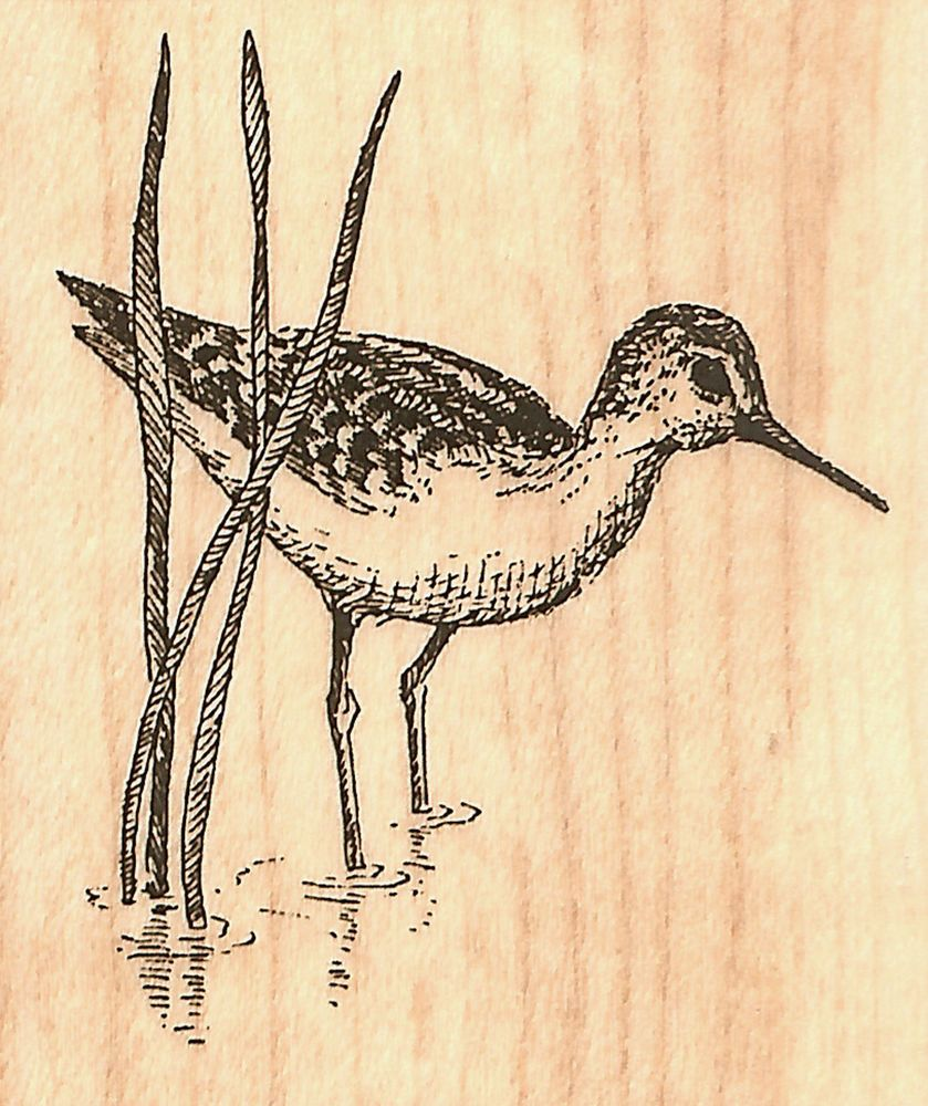 Small Sandpiper Bird Wood Mounted Rubber Stamp Impression Obsession ...