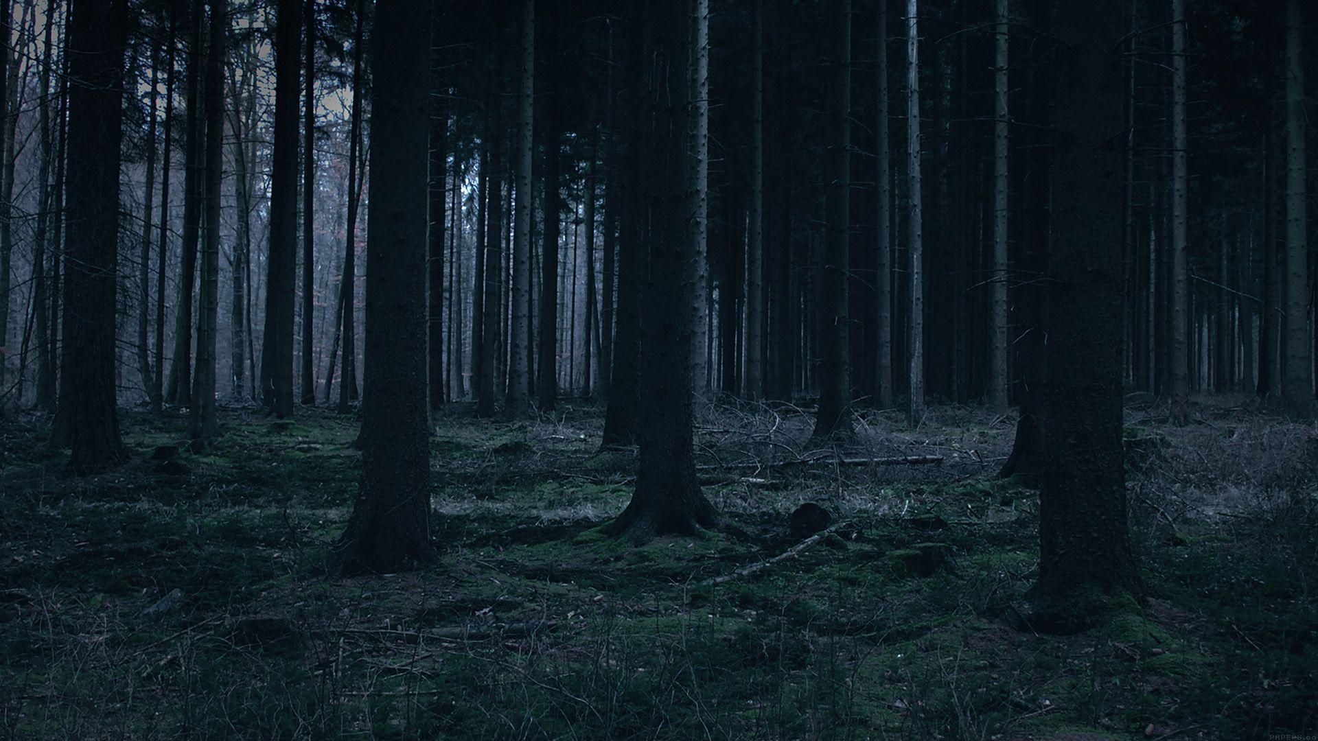 как ночной лес картинки на рабочий изображения для
