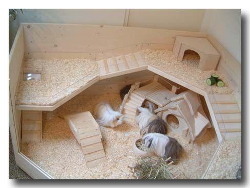 Modell Luxus Kafig Bauplan Fur Eine Top B Meerschweinchenstall Meerschweinchen Meerschweinchen Gehege