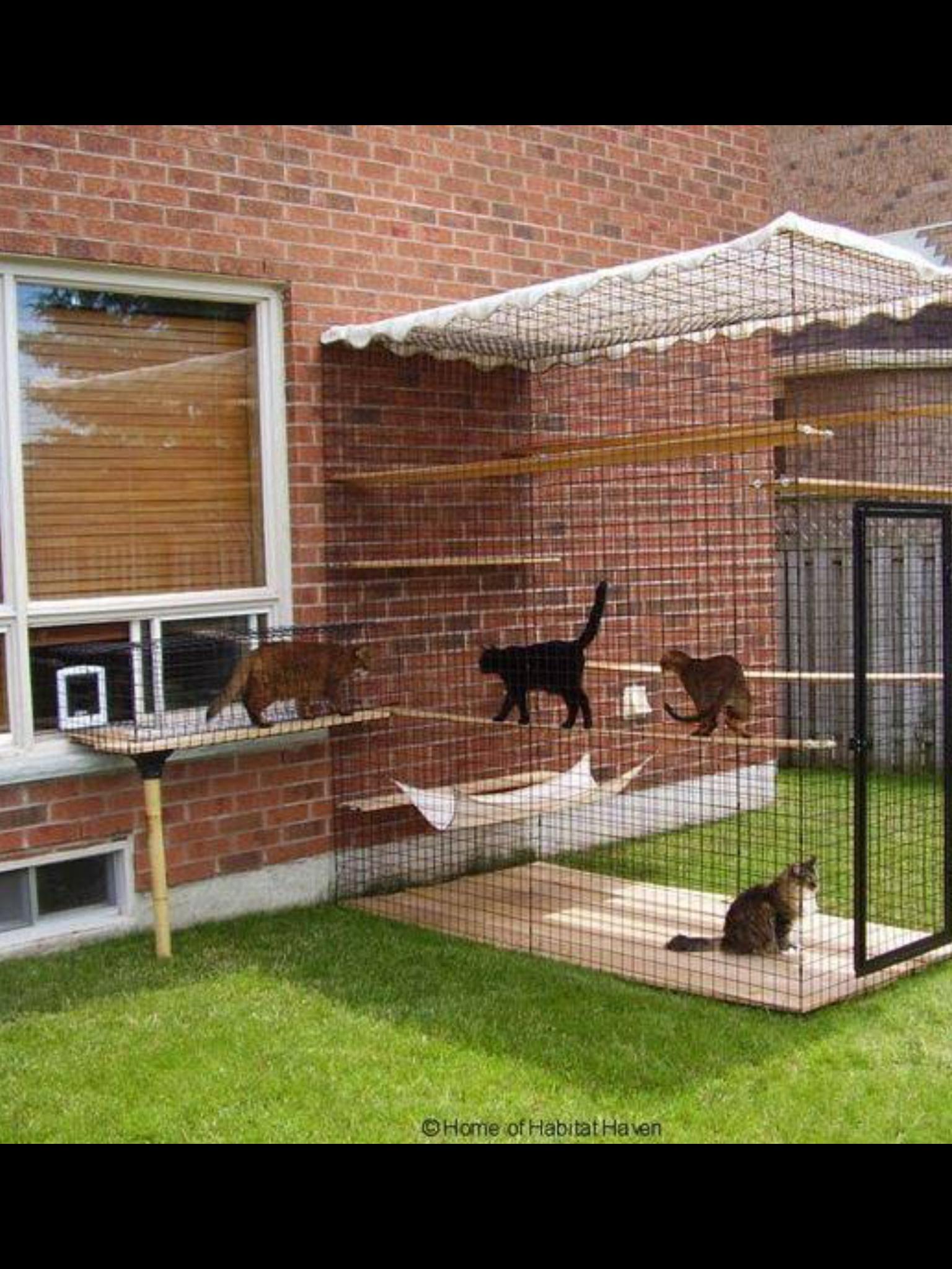 pingl par chantal boul sur chat chat bricolage pour chat et chien chat. Black Bedroom Furniture Sets. Home Design Ideas