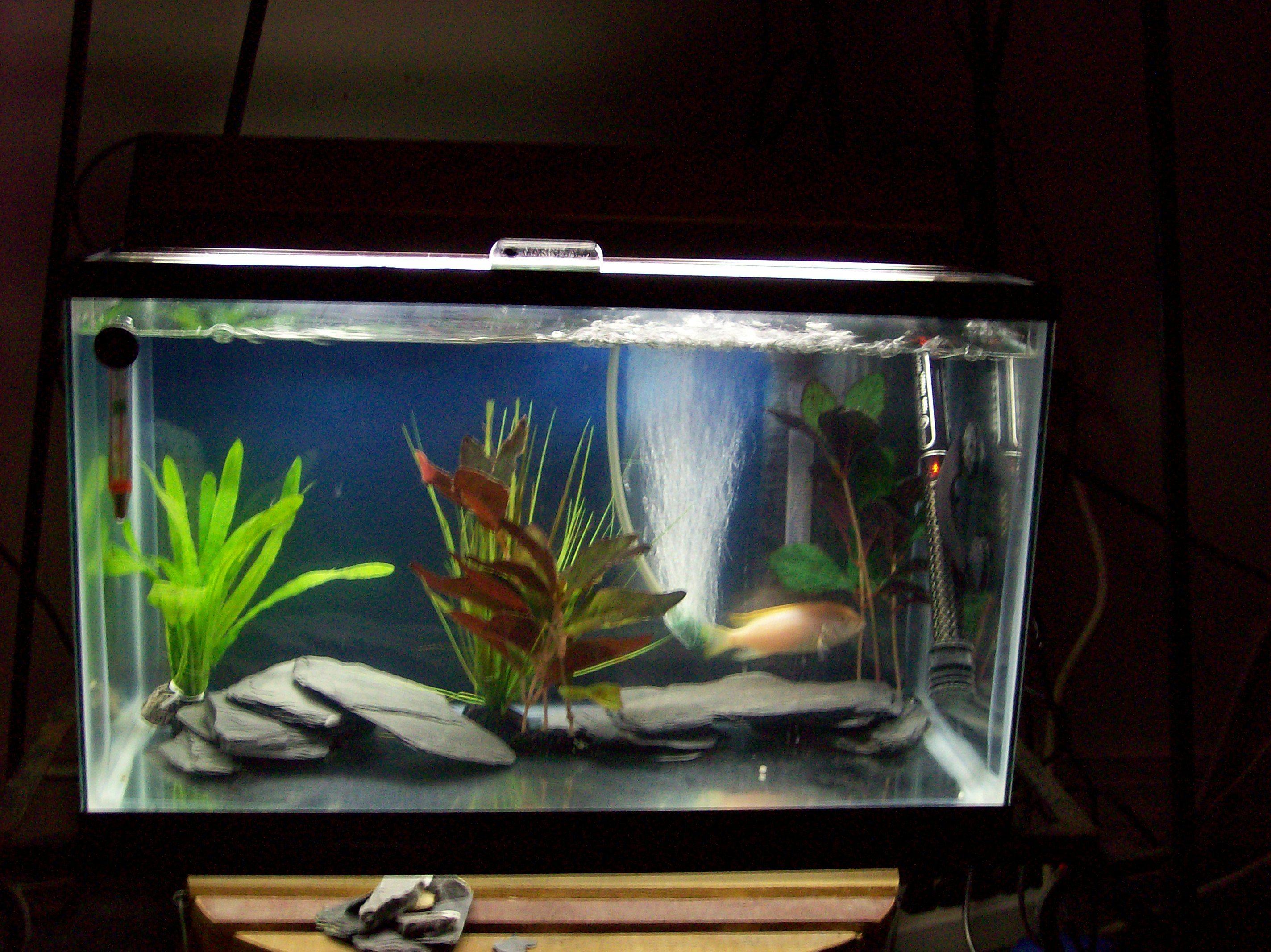 gives aquarium stand up ways alex fishtank fuck to experiments amusing now tetras a light