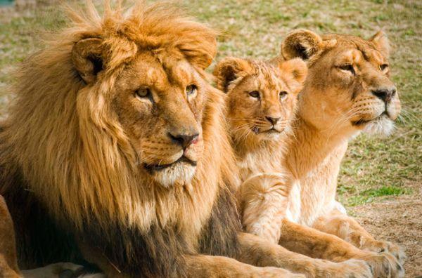 Historias increíbles de animales que han salvado vidas.