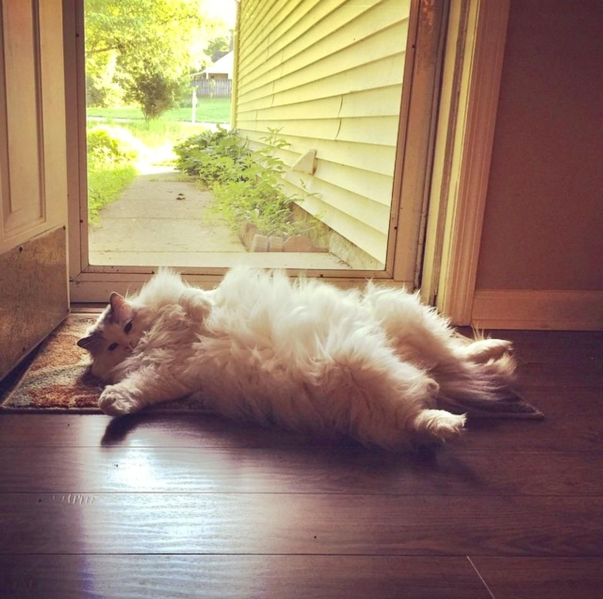 Flufficus Maximus (Buddy) catching some rays by the front door // & Flufficus Maximus (Buddy) catching some rays by the front door http ...