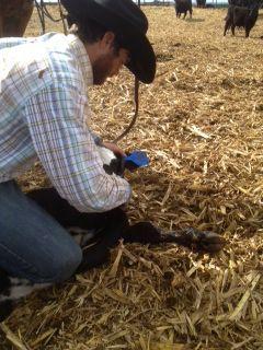 Nebraska Rancher - Calving in the Cold - proud of my hubbs!