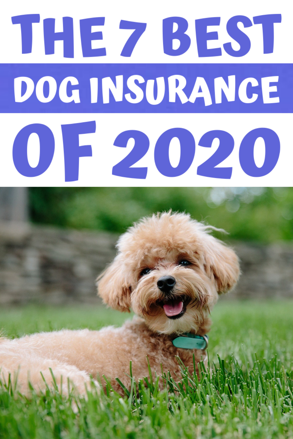 How to Find the Best Dog Insurance in 2020 Dog insurance