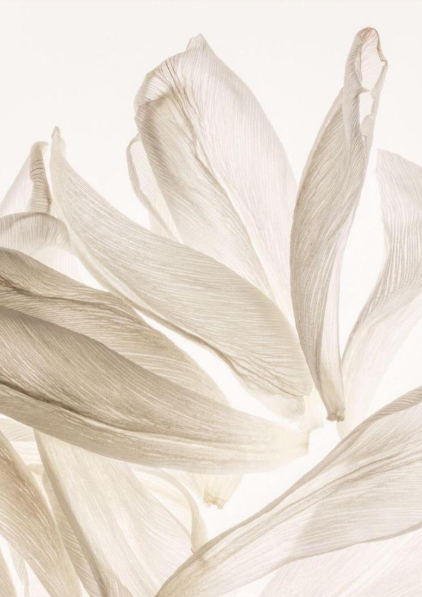 Abstract Flowers En 2020 Esthetique Beige Fond D Ecran Telephone Fond Floral