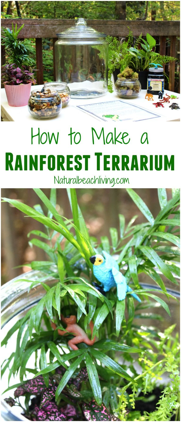 how to make a rainforest terrarium with kids | natural beach living