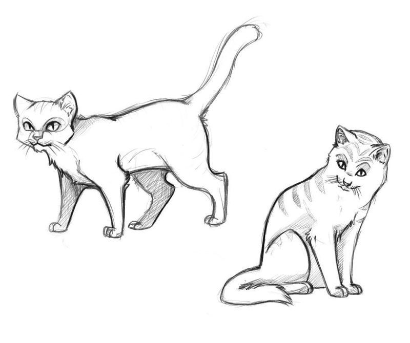 Printable Cat Coloring Pages Ideas For Kids Cat Drawing For Kid Cat Drawing Realistic Cat Drawing