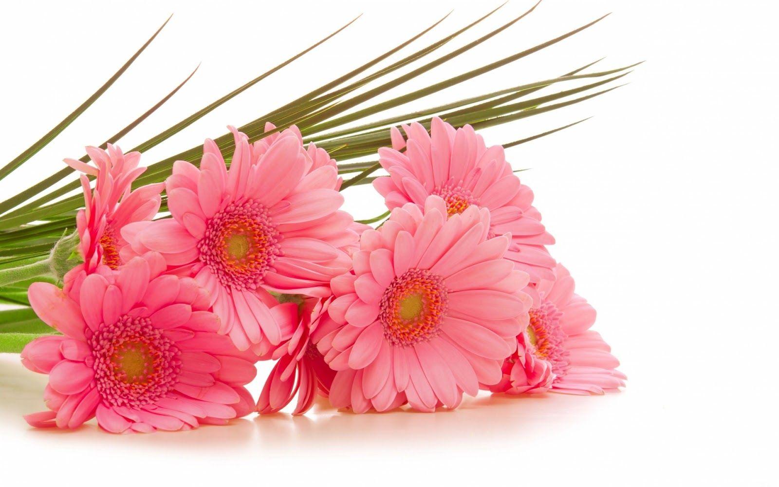 Beautiful Flower Wallpapers For Your Desktop Beautiful 19201200