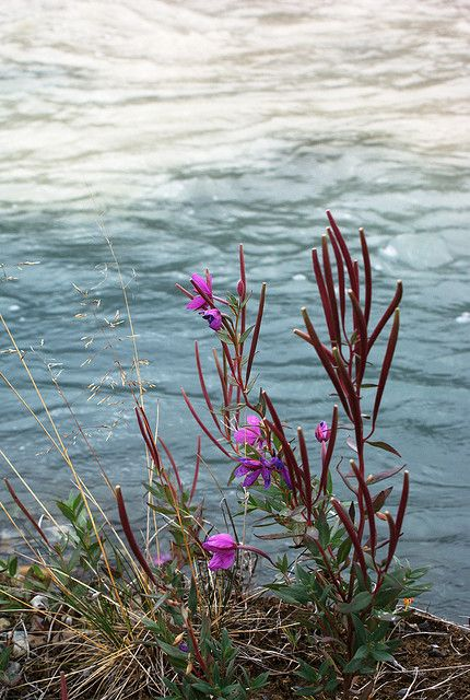 Confluence Flowers | Flickr - Photo Sharing!