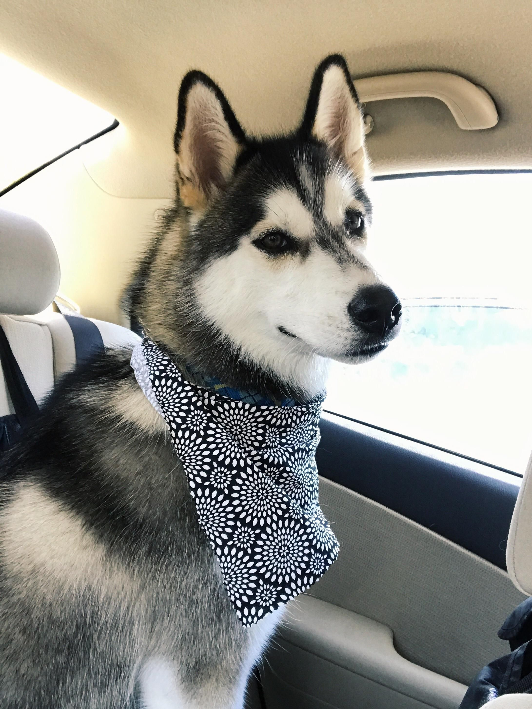 Freshly groomed and lookin' like a stud!http//ift.tt