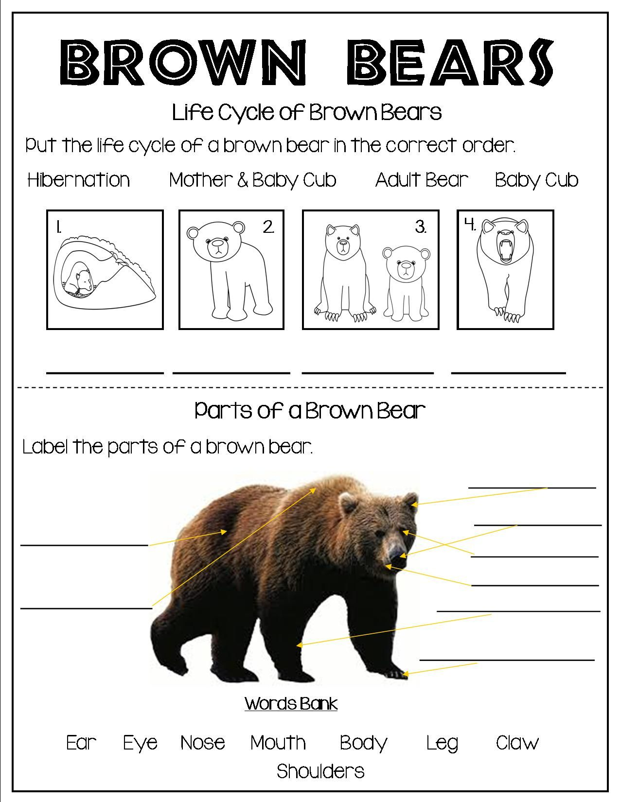 All About Brown Bears Brown Bear Bear Fun Facts About Animals [ 1650 x 1275 Pixel ]