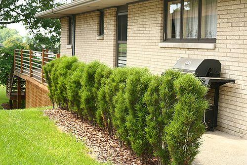 tim wood garden design pinterest shrub outdoor gardens and gardens. Black Bedroom Furniture Sets. Home Design Ideas