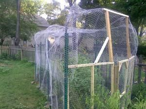 Diy Garden Cage Meant To Keep Squirrels Out Tomatoes In News Gazette
