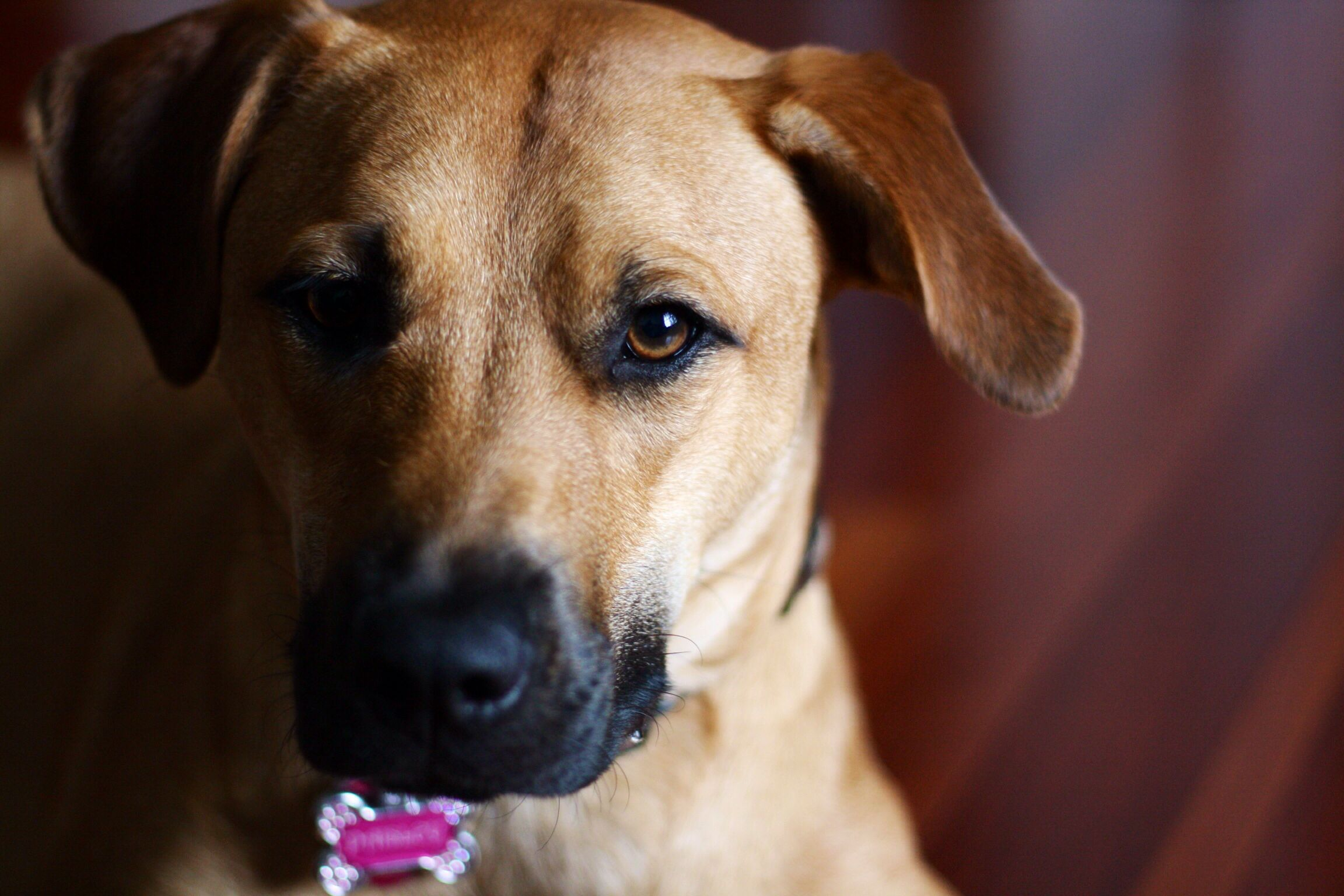 Must see Mouth Cur Black Adorable Dog - 65a04a6626b7d1a8f5bc963e0e39dc51  Trends_949617  .jpg