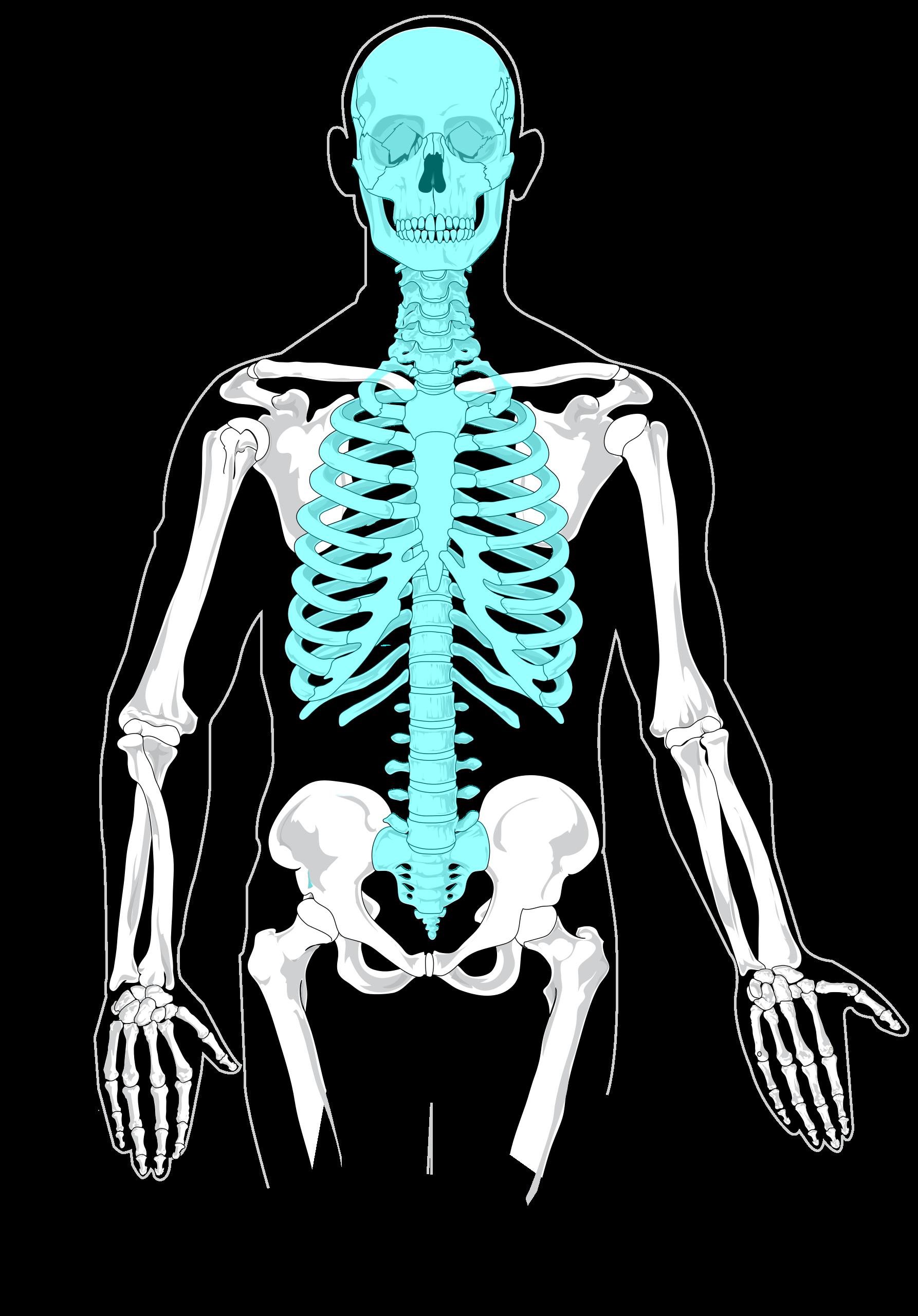 File Axial Skeleton Diagram Blankg