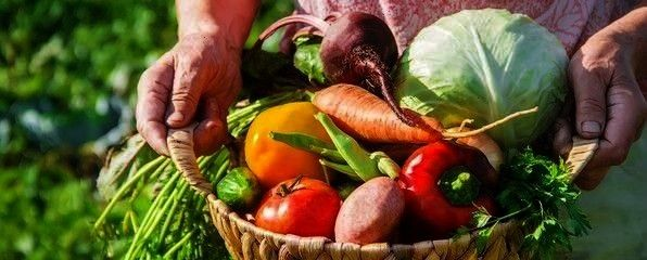 garden gather the harvest Selective focus grandmother in the garden gather the harvest Selective focus  Were making easy with our NEW Plant Kitchen products No Chicken Ki...