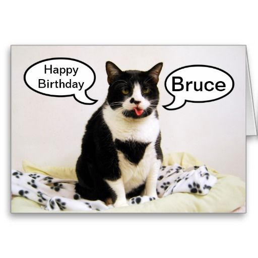>>>Are you looking for          BruceTuxedo Cat Birthday Humor Card           BruceTuxedo Cat Birthday Humor Card We provide you all shopping site and all informations in our go to store link. You will see low prices onThis Deals          BruceTuxedo Cat Birthday Humor Card Review from Asso...Cleck See More >>> http://www.zazzle.com/brucetuxedo_cat_birthday_humor_card-137604286824427935?rf=238627982471231924&zbar=1&tc=terrest