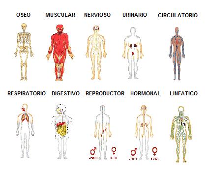 Pin de Tebsil Onarres en Nuestro Cuerpo/Our Body