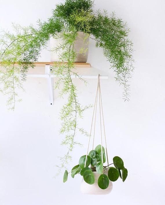 8inch Hanging Planter Basket, hanging plant, indoor plant #hangingplantsindoor