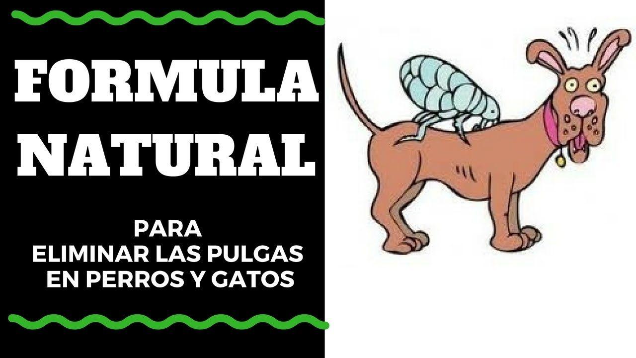 Remedios Caseros para las Pulgas en Perros y Gatos
