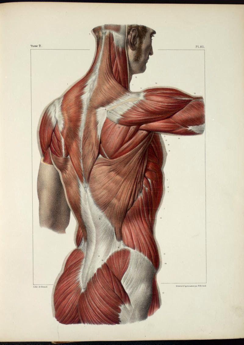 Garret\'s Drawing A Day Blog | art anatomy | Pinterest | Anatomy ...