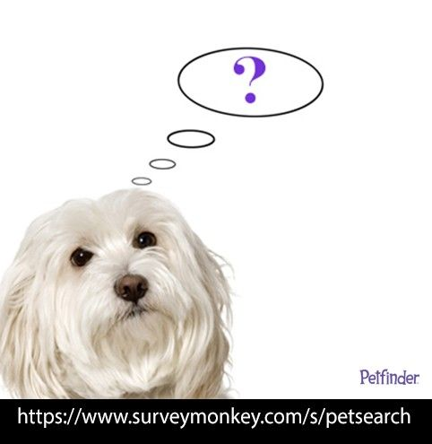 How do you search for adoptable pets? Take our #survey to help us improve our pet search tool so we can help more pets find homes!