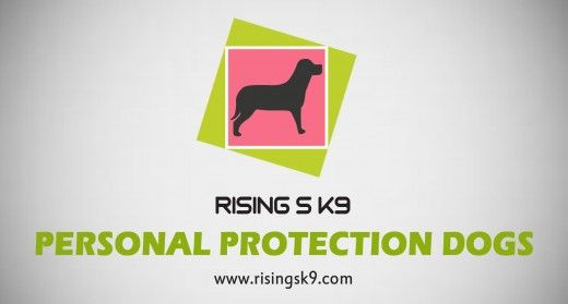 If You Re Looking For Personal Protection Dogs Then Visit Our