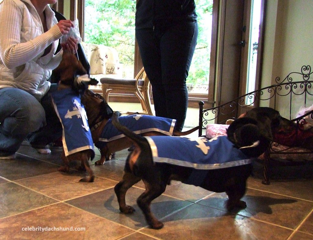 Superdogs And Halloweeners Dachshund Halloween Costumes