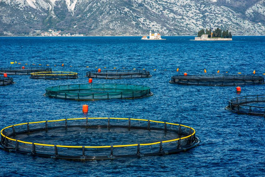 Fish Farming: Do the Pros Outweigh the Cons?
