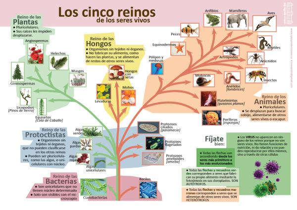 Infografías De Ciencias Naturales Ciencias Naturales Clasificacion De Seres Vivos Ciencias De La Naturaleza
