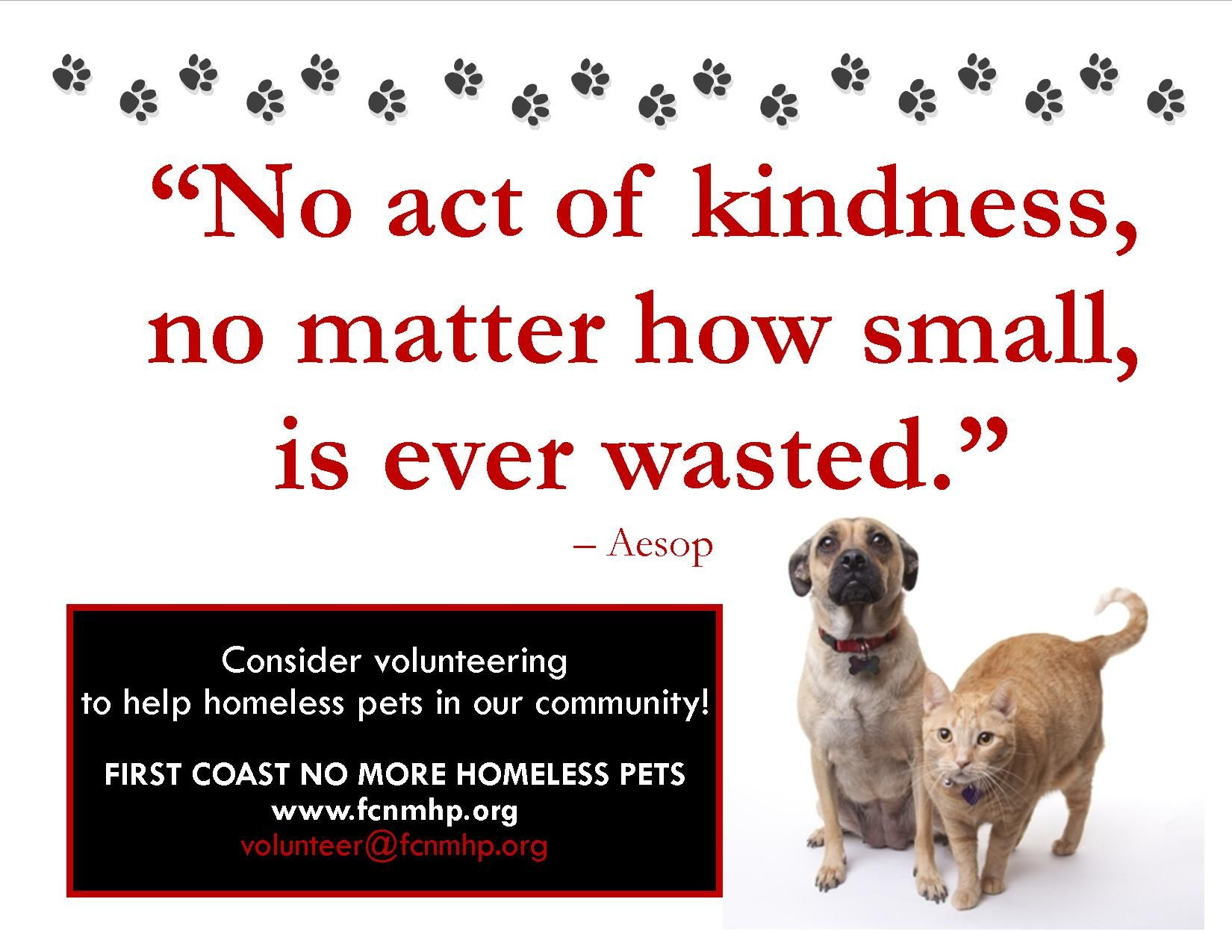 First Coast No More Homeless Pets Homeless Pets Help Homeless
