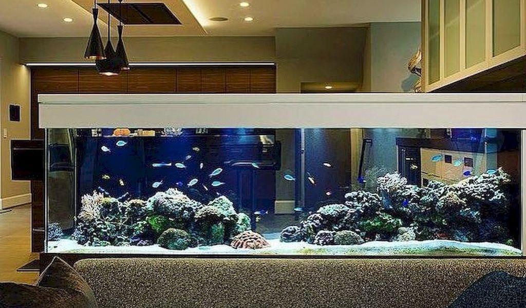 Wall Mounted Fish Tank And Aquarium Elonahome Com In 2020 Creative Walls House Design Home Decor